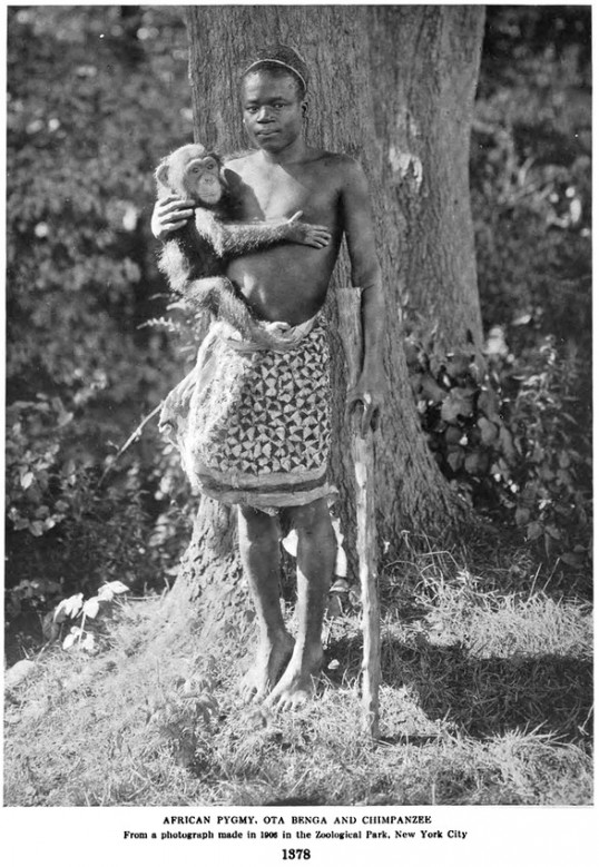 """African Pygmy, Ota Benga and Chimpanzee, From a photograph made in 1906 in the Zoological Park, New York City"" (New York Zoological Society)"